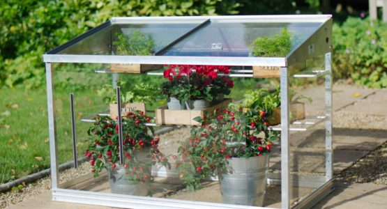 Mini greenhouse growing guide