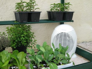 heating plants in a greenhouse