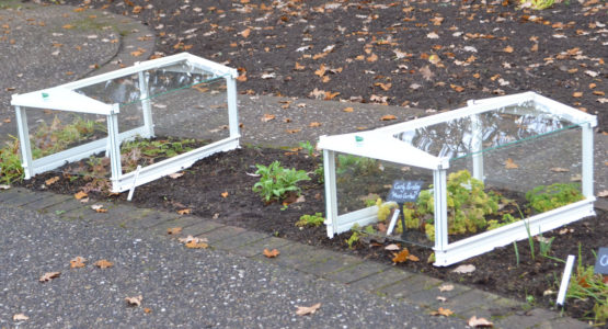Access Cloches in RHS Wisley Herb Garden