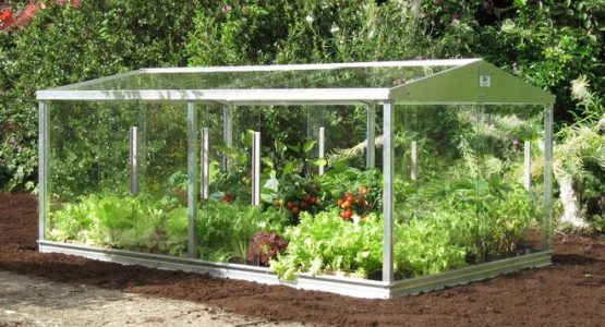 10 Reasons your Garden needs a Greenhouse