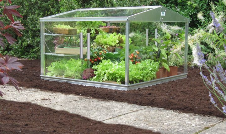 Access Cold frame on soil