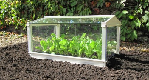 Access Garden Cloche - Ivory with lettuce