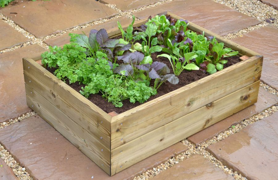 Herb and salad cloche planter access garden products - Cloche a salade ...
