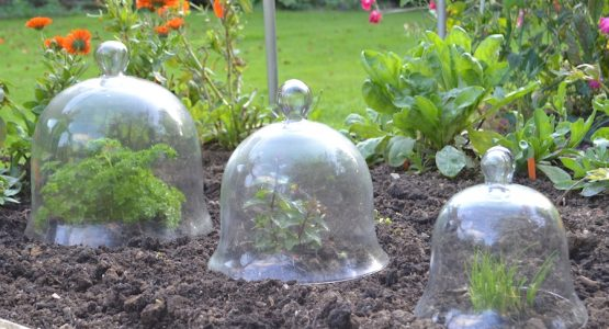 Glass Bell Cloches – ideal for protecting plants