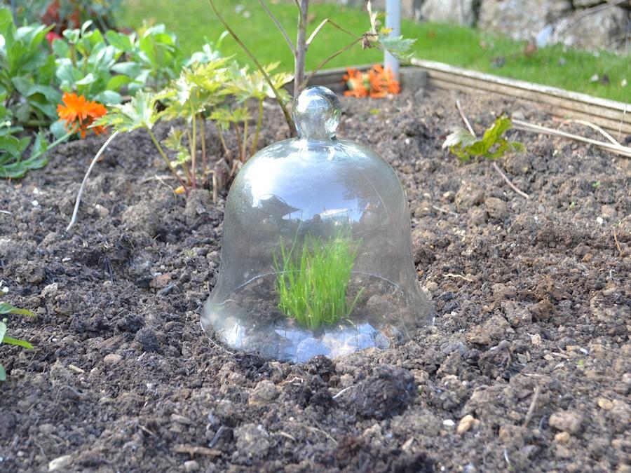 Small glass bell jar cloche