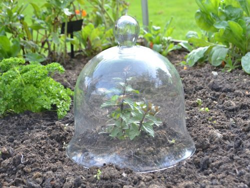 Medium glass bell jar cloche