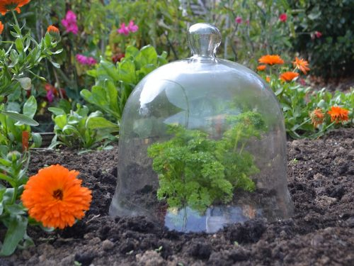 Large glass bell jar cloche