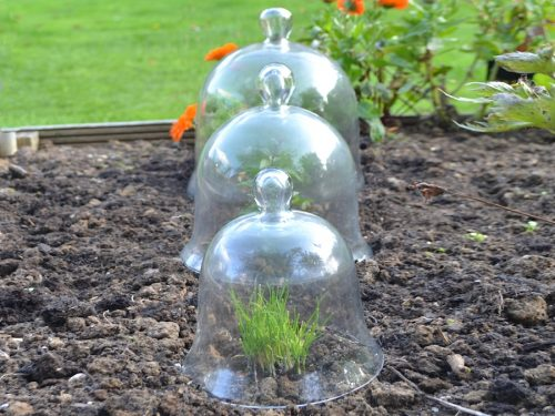 Victorian glass bell jar cloches