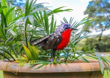 RSPB Metal Bird Collection