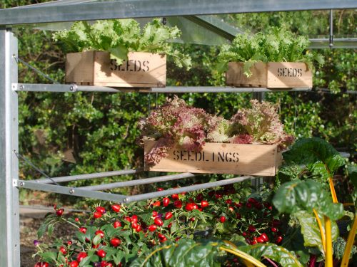 Cold Frame shelf set