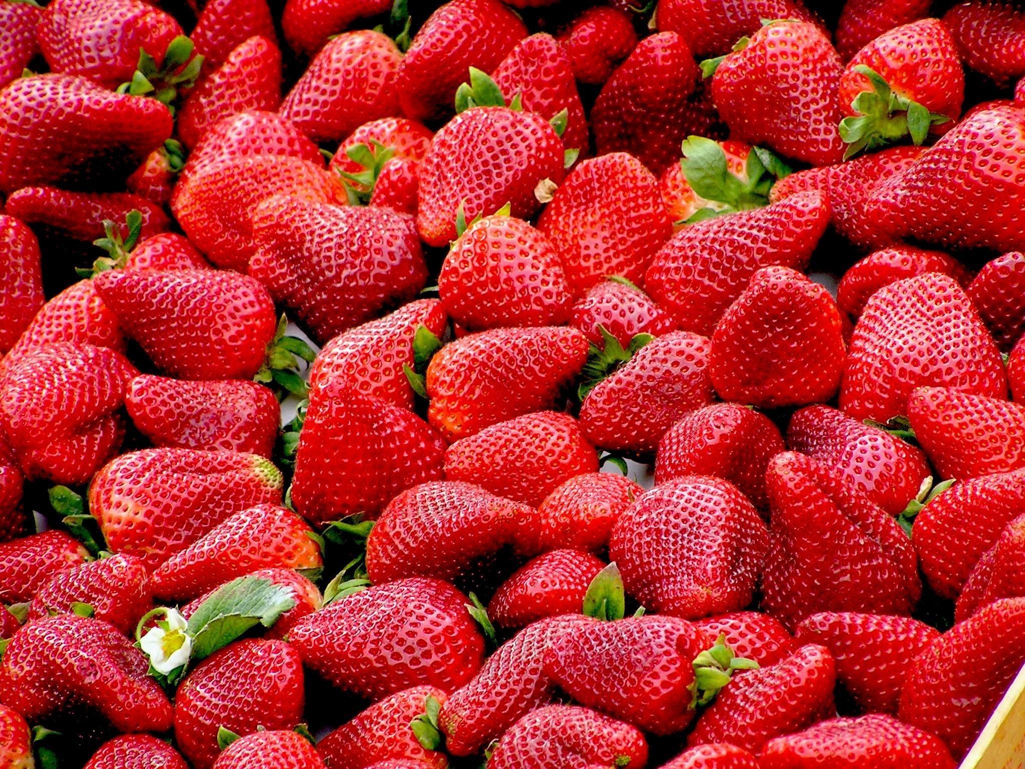 growing strawberries