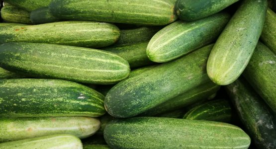 Your guide to growing cucumbers in a greenhouse