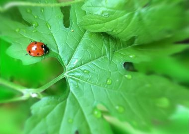 How to Protect Your Plants From Insects