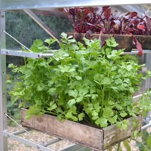 Seed tray shelves for tomato houses