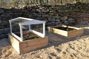 Lettuce under cloche: 24th February