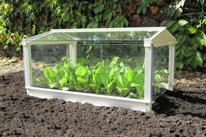 Glass cloche could be used as a glass tortoise shelter